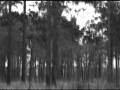 trees shadowed in forest
